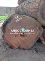 Tropical Wood  Logs - Azobe logs (Lophira alata)