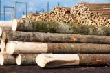Softwood  Logs - Spuce logs - big volumes - need supplier