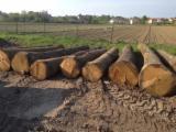 Hardwood  Logs - Veneer Logs, Oak (European)