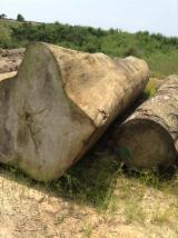 Tropsko Drvo  Trupci - Za Rezanje, Tali, Doussie, Kosso