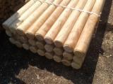 Hardwood  Logs - 8-14 cm, Acacia,  Conical shaped round wood, Poland