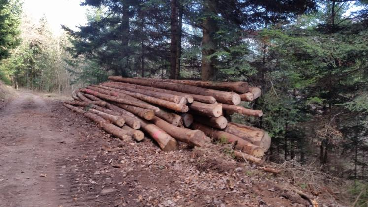 Spruce-%28Picea-abies%29---Whitewood--20-cm--107--Saw-Logs