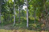Woodlands - Selling Mahogany Forest