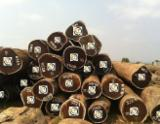 Tropical Wood  Logs - WENGE Logs from 3mt to 8mt from DR Congo