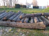 Hardwood  Logs - Veneer Logs, Walnut (American Black)