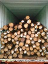 Tropical Wood  Logs - EUCALYPTUS WOOD