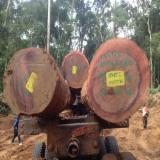 Tropical Wood  Logs For Sale - Tali Round Logs For Sale