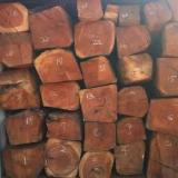 Tropical Wood  Logs - Request for Doussie