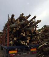 Firewood, Pellets And Residues for sale. Wholesale Firewood, Pellets And Residues exporters - Poplar Firewood/woodlogs Cleaved -- mm