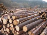 Softwood  Logs - Selling: Logs, softwood (spruce, pine)