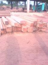 Tropical Wood  Logs - TALI square logs for sale