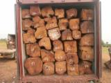 Tropical Wood  Logs - Import Kosso Wood from Africa