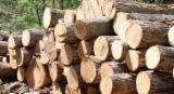 Tropical Wood  Logs - Import Doussie, Kosso, Tali ... from Africa