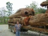 Tropical Wood  Logs For Sale - Offer Cocobolo square logs