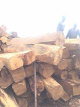 Tropical Wood  Logs - Need a buyer ASAP!
