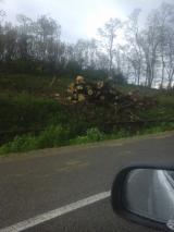 Acacia Hardwood Logs - +20+35+40+50 cm Acacia Saw Logs in Romania Bistrita Nasaud