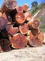 Laubrundholz  Zu Verkaufen - Schnittholzstämme, Merbau