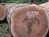 Tropical Wood  Logs - Saw Logs, Bubinga (Kevazingo, Akume)