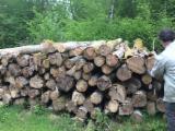 Yakacak Odun ve Ahşap Artıkları - Yakacak Odun; Parçalanmış – Parçalanmamış Yakacak Odun – Parçalanmamış Gürgen, Meşe
