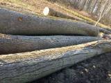 Ash logs AB - GRADE offer