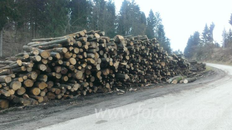 Beech-%28europe%29-Firewood-woodlogs-Not-Cleaved-15-