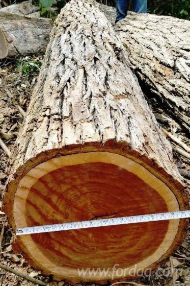 Granadillo Platymiscium Yucatanum Logs
