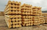 Softwood  Logs - Round logs of spruce without bark (diameter: 200-260 mm, Length: 4-6 meters)