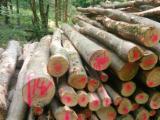 Hardwood  Logs - Industrial Logs, Beech (Europe)
