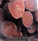 Madera Tropical  Troncos - Troncos para Aserrar, Doussie (Afzelia, Lingue, Apa, Chanfuta)
