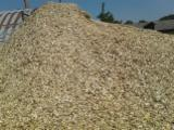 Firewood - Chips - Pellets Supplies - All Species Wood Chips From Used Wood 20-70 mm