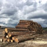 Nadelrundholz Zu Verkaufen - Schnittholzstämme, Mongolische Waldkiefer