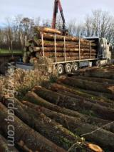 Usluge Transporta Poljska - Drumski Transport, 10 kamiona Spot - 1 put
