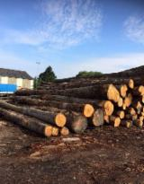 Netherlands Hardwood Logs - European Chestnut saw logs