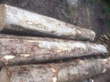 Forest and Logs - 40 cm Flamed Maple Veneer Logs Switzerland