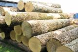 Hardwood Logs importers and buyers - Need to import Ash logs 20 cont. 30% 30-39 cm, 70% 40+cm