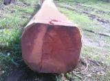 Tropsko Drvo  Trupci - Za Rezanje, Balsamo (Incienso colorado, Quina quina, Cabreuva, Vermelha, Estoraque)