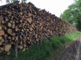 Oak (European) in France Firewood/Woodlogs Cleaved 10 - 40 mm
