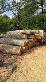 Beech  Hardwood Logs for sale. Wholesale exporters - 28+ cm, Beech (Europe), Saw Logs