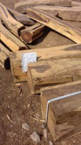Tropical Wood  Sawn Timber - Lumber - Planed Timber - Mexican Cocobolo 360 square logs with Cites (40m3)