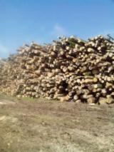 Romania Hardwood Logs - 10+ cm Firewood in Romania