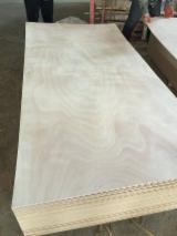 Okoume Plywood for sale