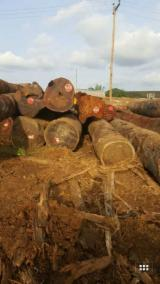 Tropical Wood  Logs - Need import Tali Logs from Cameroon