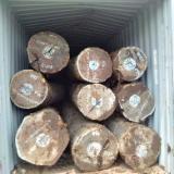 Tropical Wood  Logs - B/C (second), 50 m, Bubinga (Kevazingo, Akume), Saw Logs