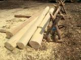Hardwood  Logs - Handmade rounded acacia timber on request