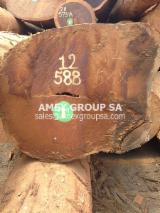 Tropical Wood  Logs - Bilinga logs