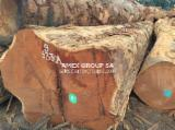 Tropical Wood  Logs For Sale - Doussie logs (bipendensis)