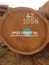 Tropical Wood  Logs For Sale - Izombe logs