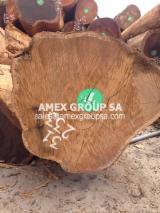 Tropical Wood  Logs For Sale - Movingui logs