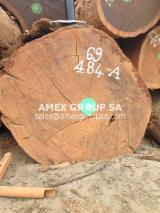 Tropical Wood  Logs For Sale - Okan logs