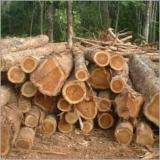 Tropical Wood  Logs - Seeking for Tali Logs & Lumber